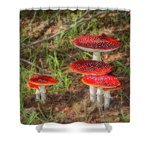 Fly Agaric Amanita Muscaria Shower Curtain