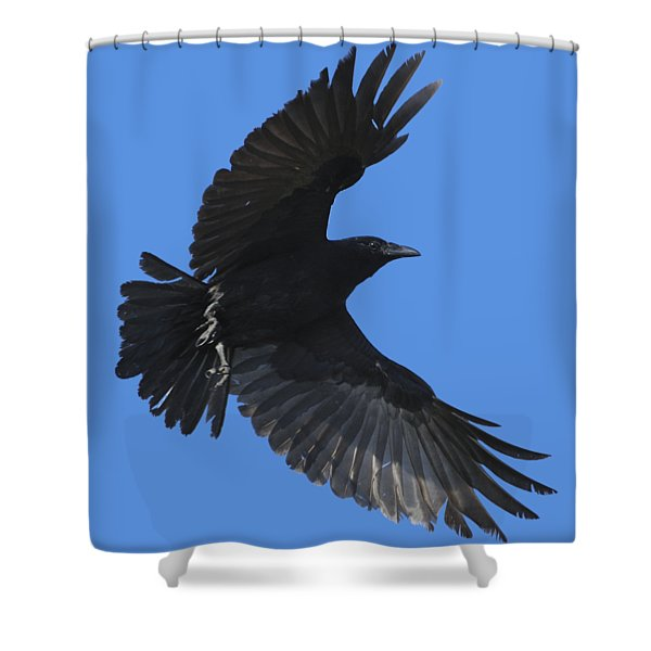 Flying Crow Shower Curtain