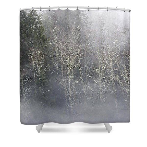 Foggy Alders In The Forest Shower Curtain