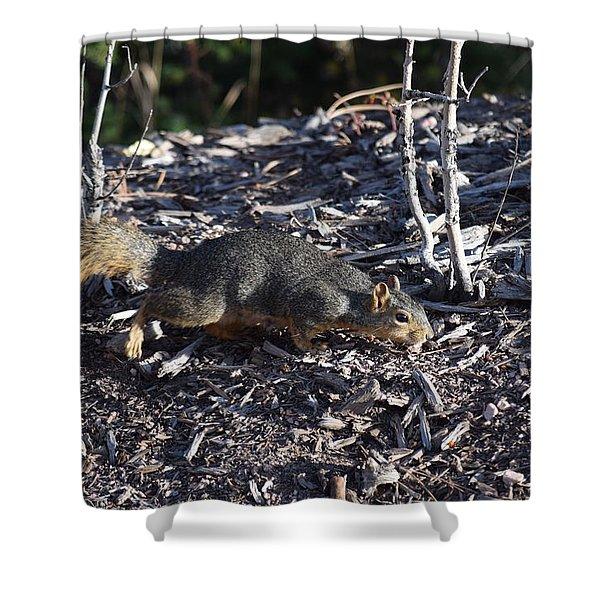 Squirrel Pprh Woodland Park Co Shower Curtain