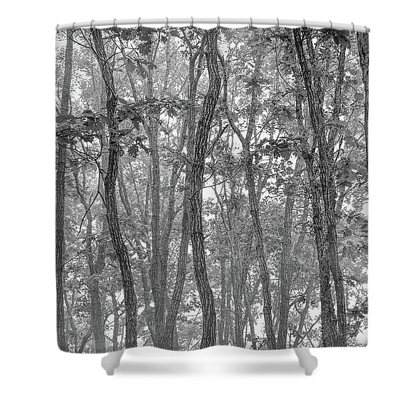 Forest #090 Shower Curtain