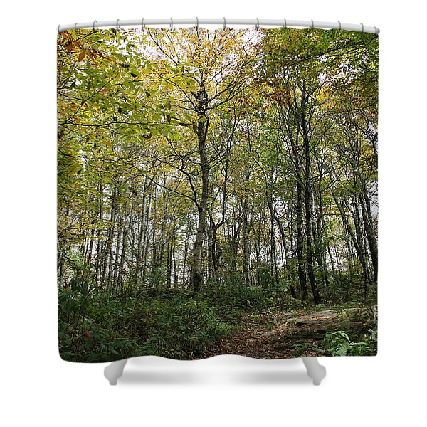 Forest Canopy Shower Curtain