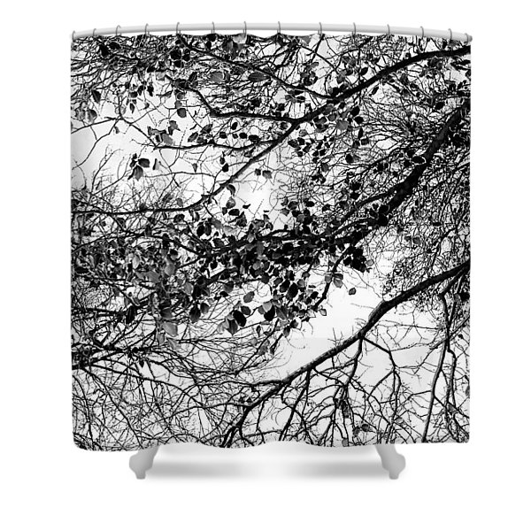 Forest Canopy Bw Shower Curtain