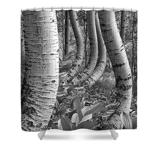 Forest Curves Shower Curtain