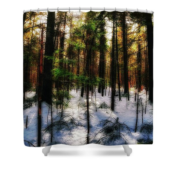 Forest Dawn Shower Curtain