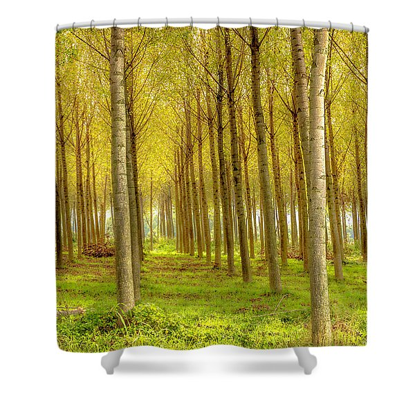 Forest In Autumn Shower Curtain