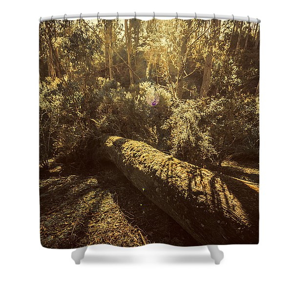Forest In Fall Shower Curtain