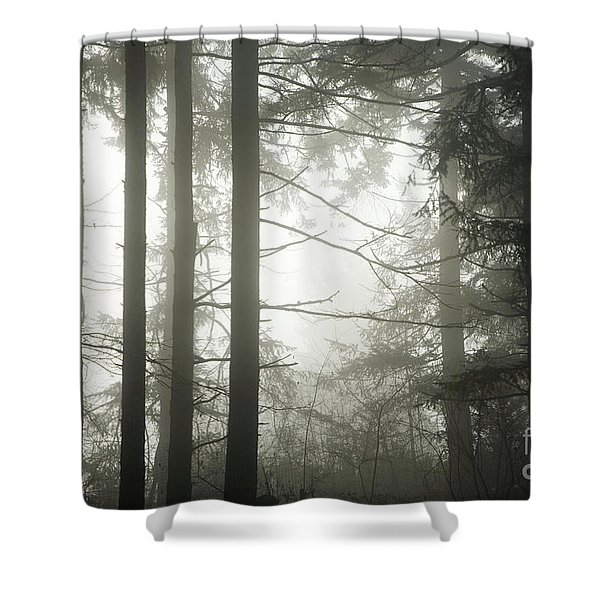 Forest In The Fog Shower Curtain
