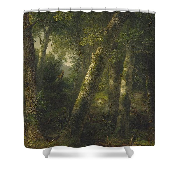 Forest In The Morning Light Shower Curtain