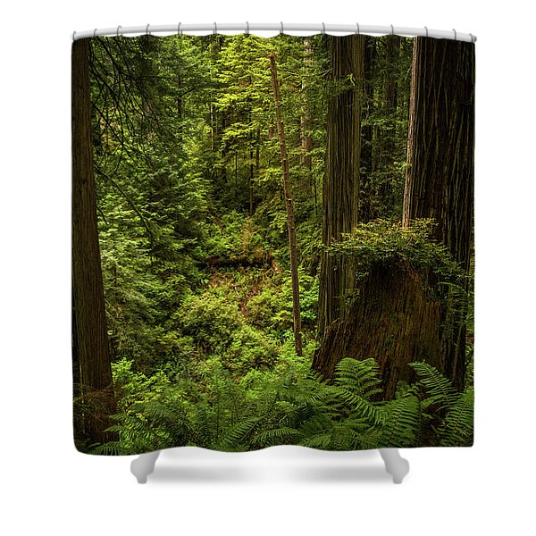Forest Primeval Shower Curtain