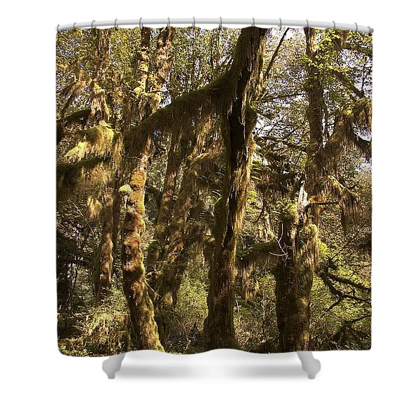 Forest Setting In Hoh Rain Forest Shower Curtain