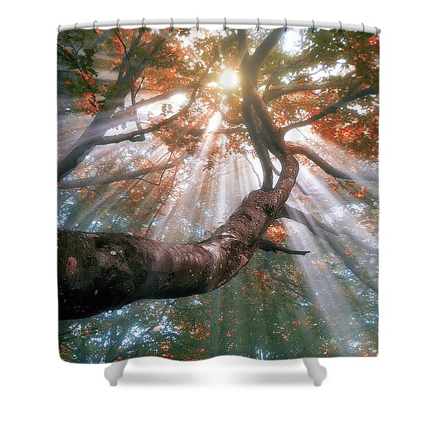 Forest With Fog And Sun Rays Shower Curtain
