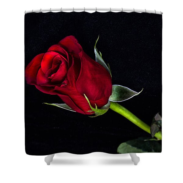 Forever Lasting Rose  Shower Curtain