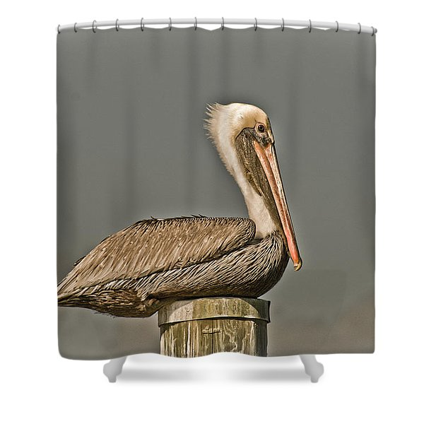 Fort Pierce Pelican Shower Curtain