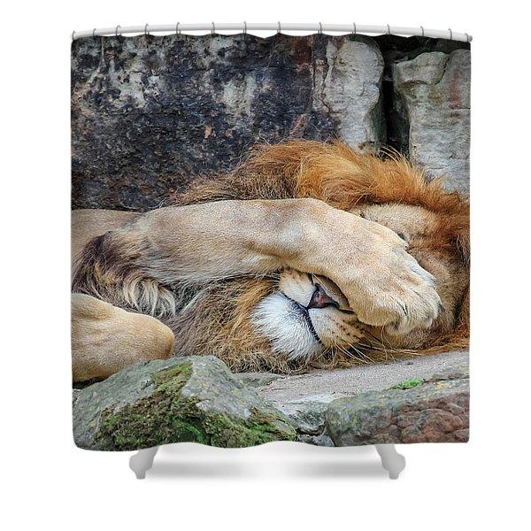 Fort Worth Zoo Sleepy Lion Shower Curtain