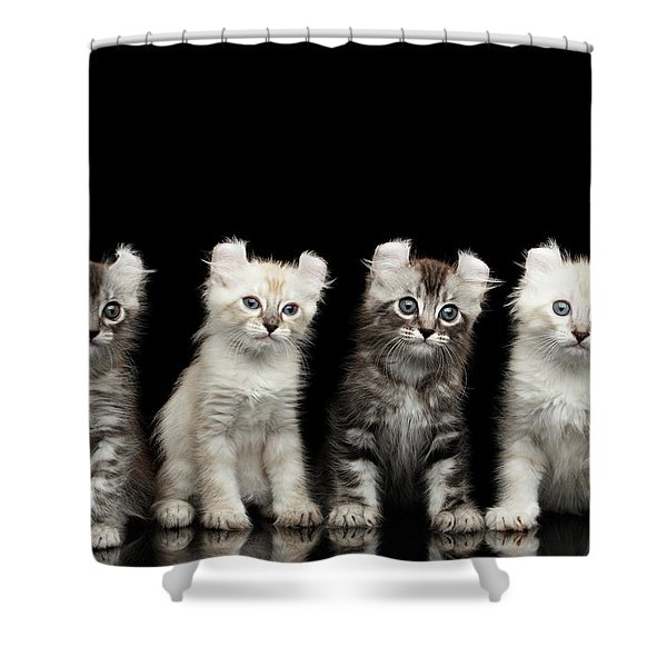 Four American Curl Kittens With Twisted Ears Isolated Black Background Shower Curtain