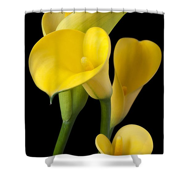 Four Yellow Calla Lilies Shower Curtain