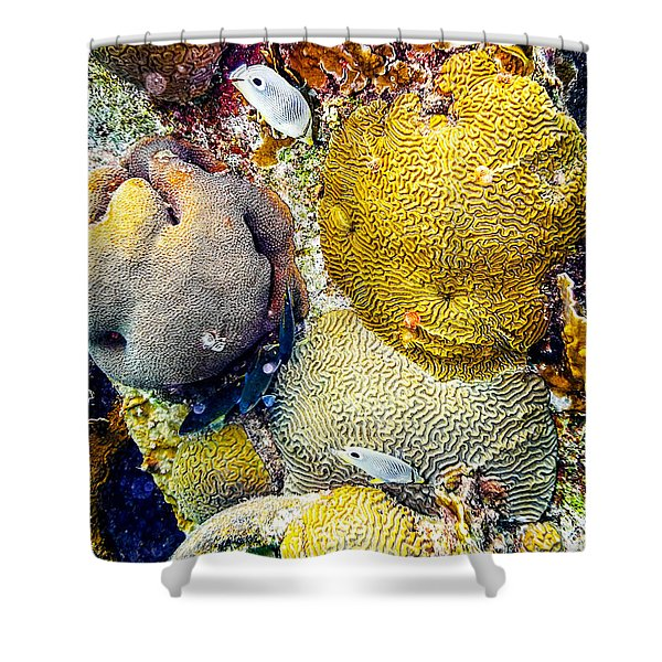 Shower Curtain featuring the photograph Foureye Butterflyfish by Perla Copernik