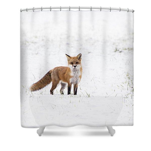 Fox 1 Shower Curtain