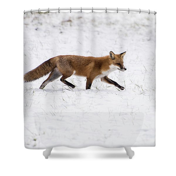 Fox 3 Shower Curtain