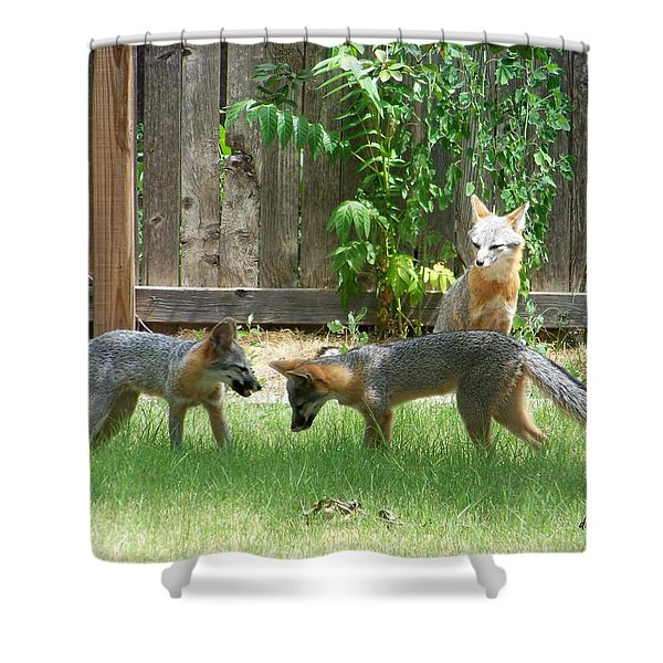 Shower Curtain featuring the photograph Fox Family by Deleas Kilgore