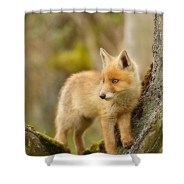 Fox Kit In A Tree Shower Curtain