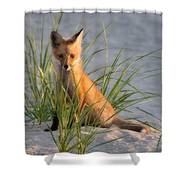 Fox Kit Portrait Shower Curtain