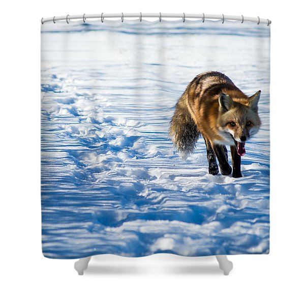 Fox Path Shower Curtain