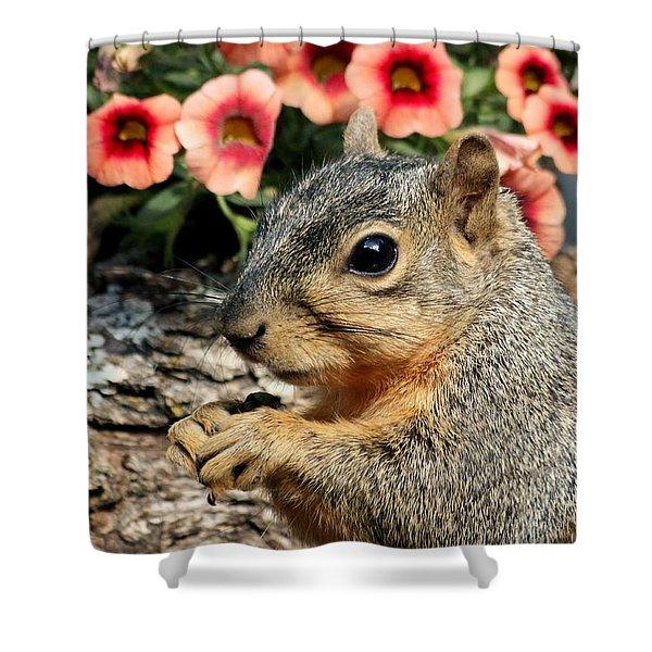 Fox Squirrel Portrait Shower Curtain
