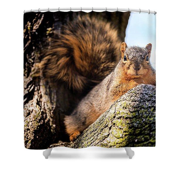Fox Squirrel Watching Me Shower Curtain