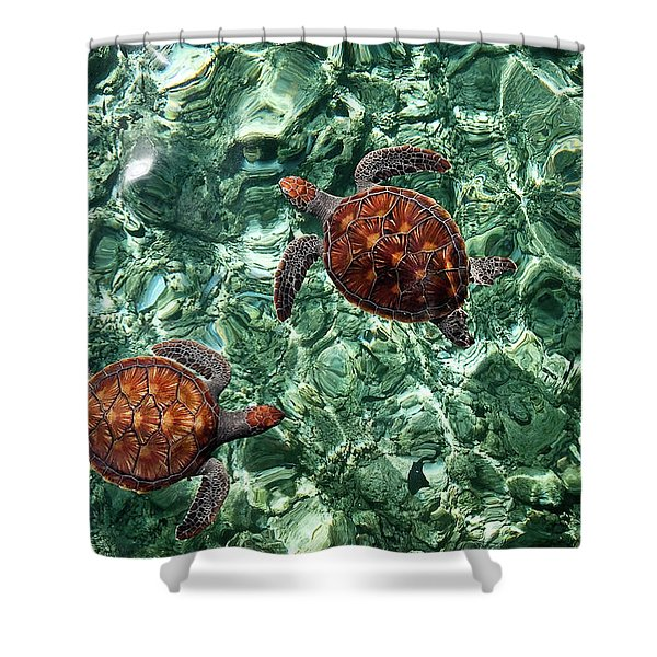 Fragile Underwater World. Sea Turtles In A Crystal Water. Maldives Shower Curtain