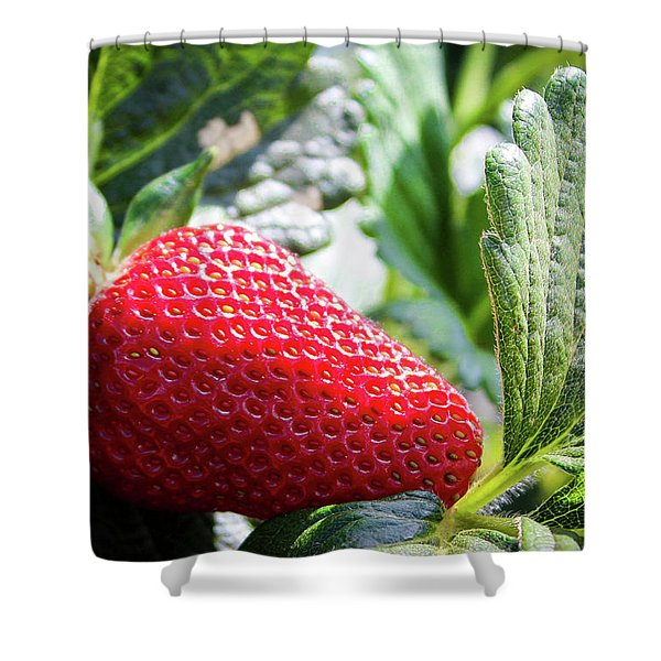 Fraise Shower Curtain