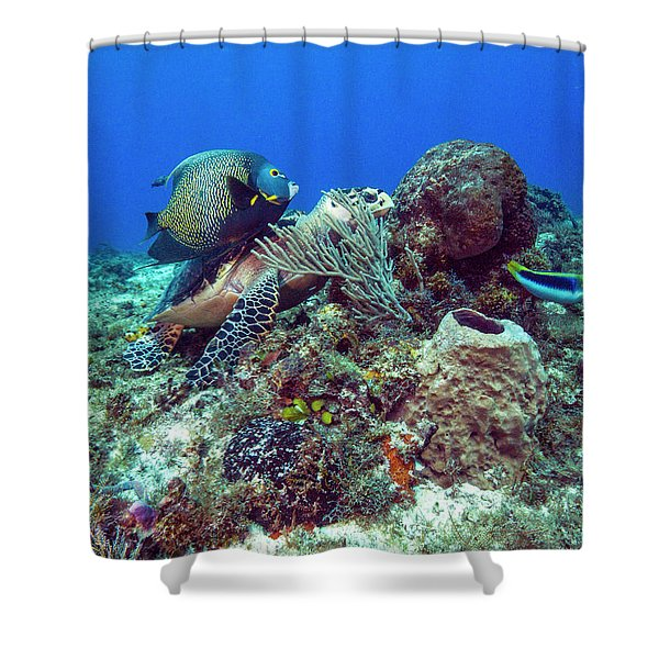 French Angelfish And The Green Turtle Shower Curtain