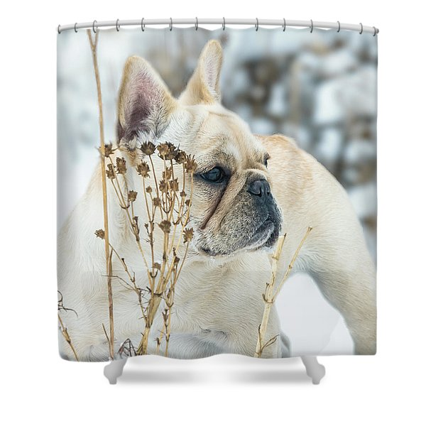 French Bulldog In The Snow Shower Curtain