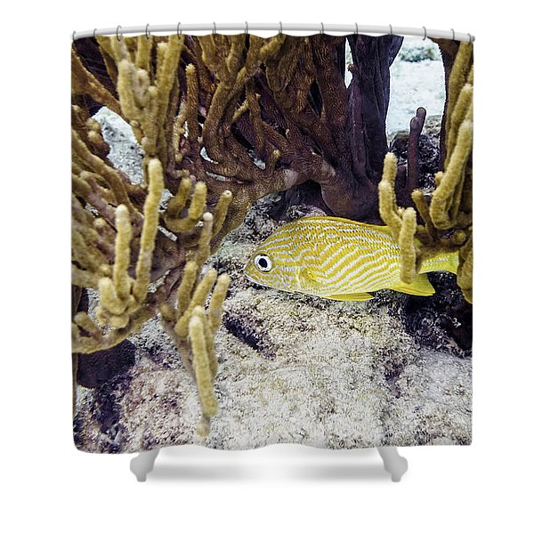 Shower Curtain featuring the photograph French Grunt Swimming by Perla Copernik