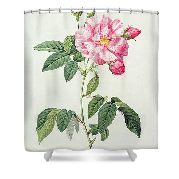 French Rose Shower Curtain