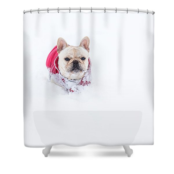 Frenchie In The Snow Shower Curtain