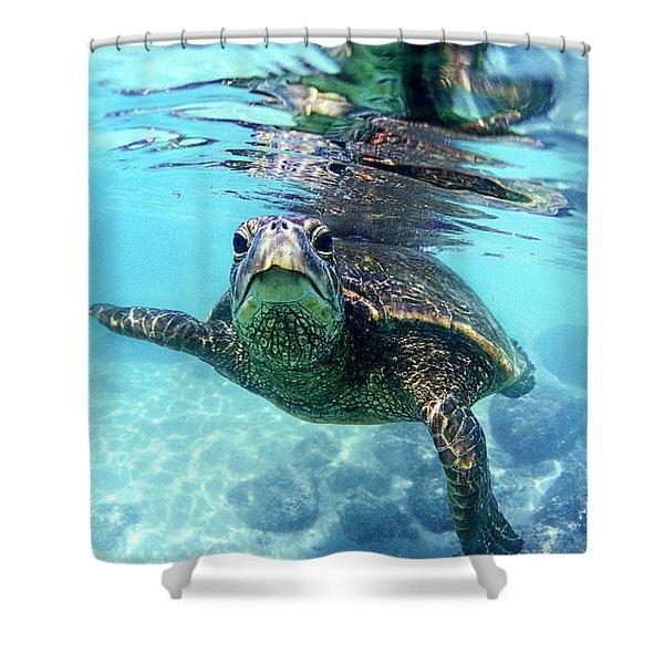 friendly Hawaiian sea turtle  Shower Curtain