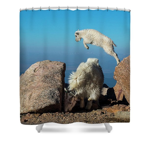 Leaping Baby Mountain Goat Shower Curtain