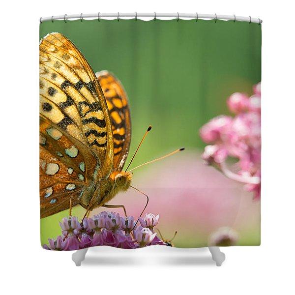 Fritillary Shower Curtain
