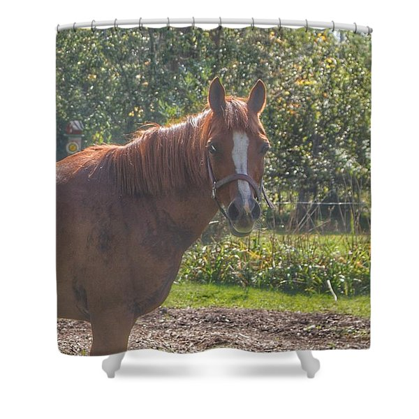 1010 - Froede Roads' Chestnut Brown Shower Curtain
