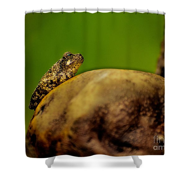 Frog Waits Shower Curtain