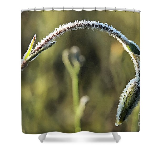 Frost On Flower Shower Curtain