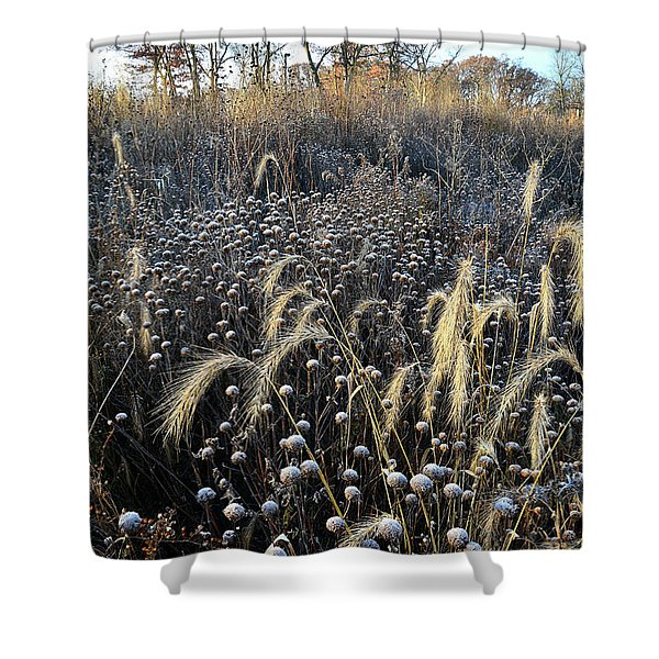 Frosted Foxtail Grasses In Glacial Park Shower Curtain