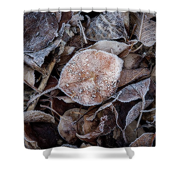 Frosty Leaves In A Small Pile Shower Curtain