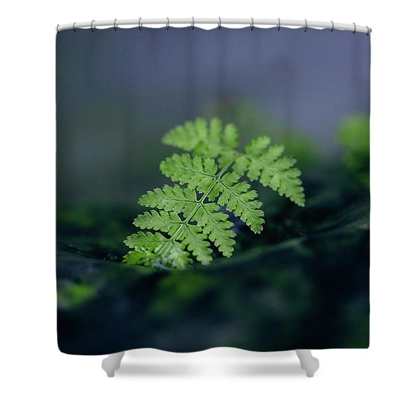 Frozen Fern II Shower Curtain