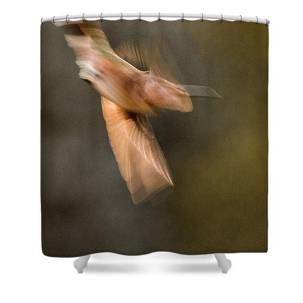 ...frozen Flight Hummingbird.... Shower Curtain
