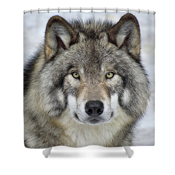 Full Attention  Shower Curtain