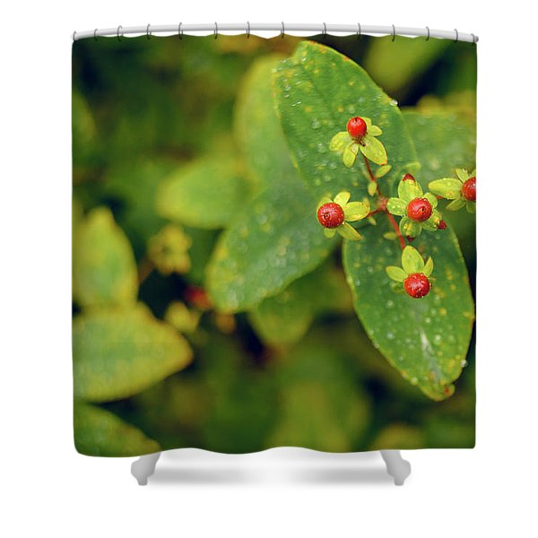 Fall Berry Shower Curtain