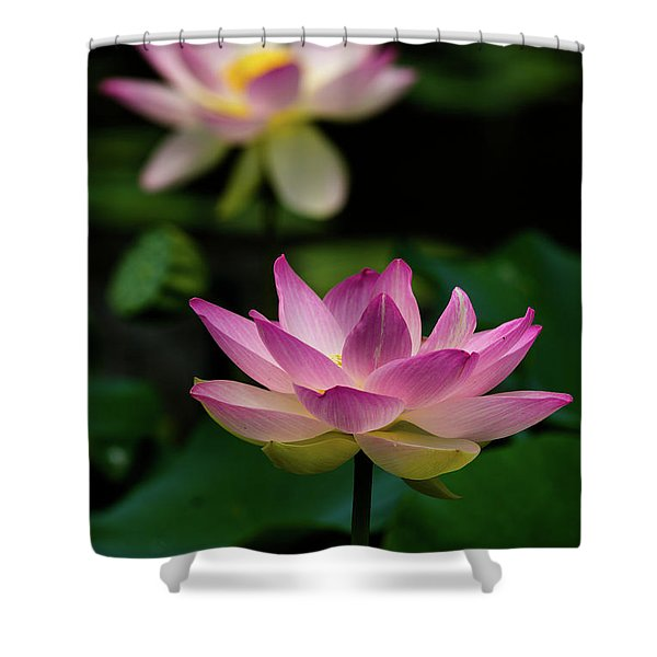 Full Blooming Dual Lotus Lilies Shower Curtain